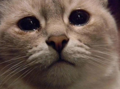 A Cat Runny Eye Will Make It Look As If Your Has Been Crying You Notice That Might Be Good Idea To Contact Veterinarian Keep