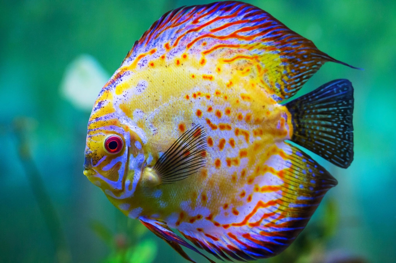 Top 12 most beautiful fish in the world enkiverywell for Best fish in the world