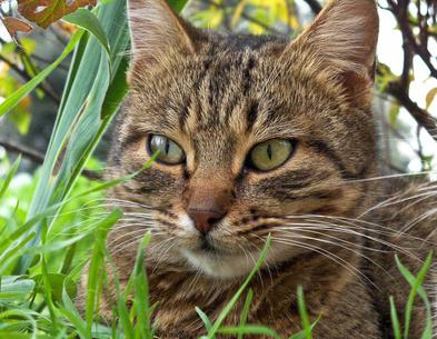 How To Get Rid Of Stray Cats In Your Backyard 11 ways to rid feral cats - enkiverywell