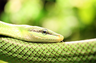 Use the following methods to learn how to get rid of snakes that are already present in your yard.