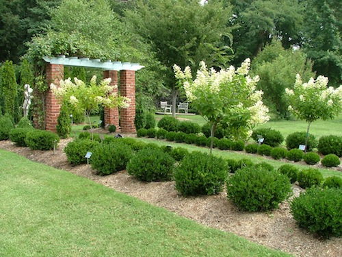 10 Best Small Evergreen Shrubs: Flowering and Foliage